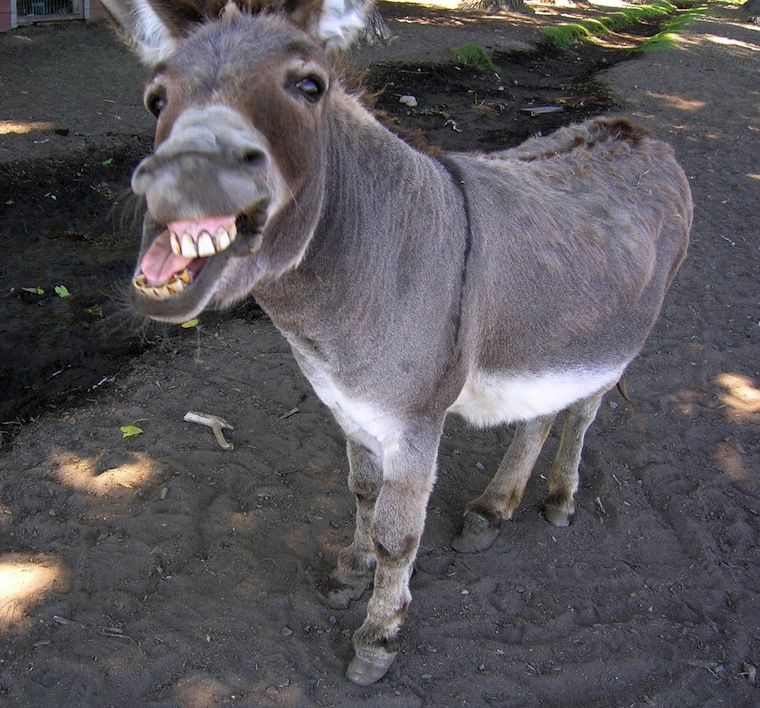 Donkey of the Week (James Rohrs)
